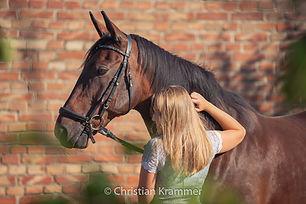 pferdefotografie christian krammer sunlanddesign oberwart burgenland
