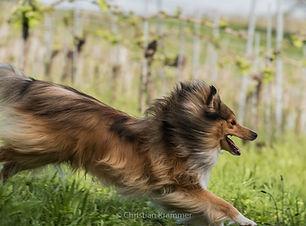 hundeportraits fotograf krammer burgenland oberwart
