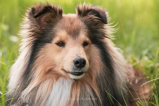 hundefotografie großpetersdorf sunlanddesign photography
