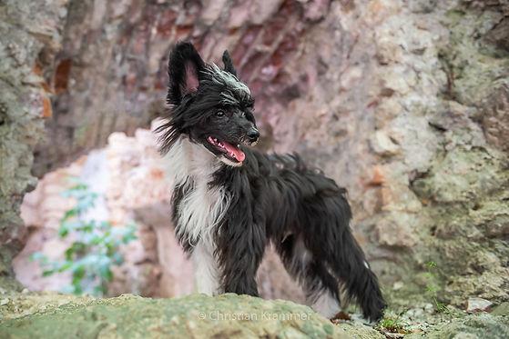 hundeportraits sunlanddesign photography christian krammer