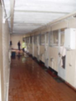 indoor kennels.JPG