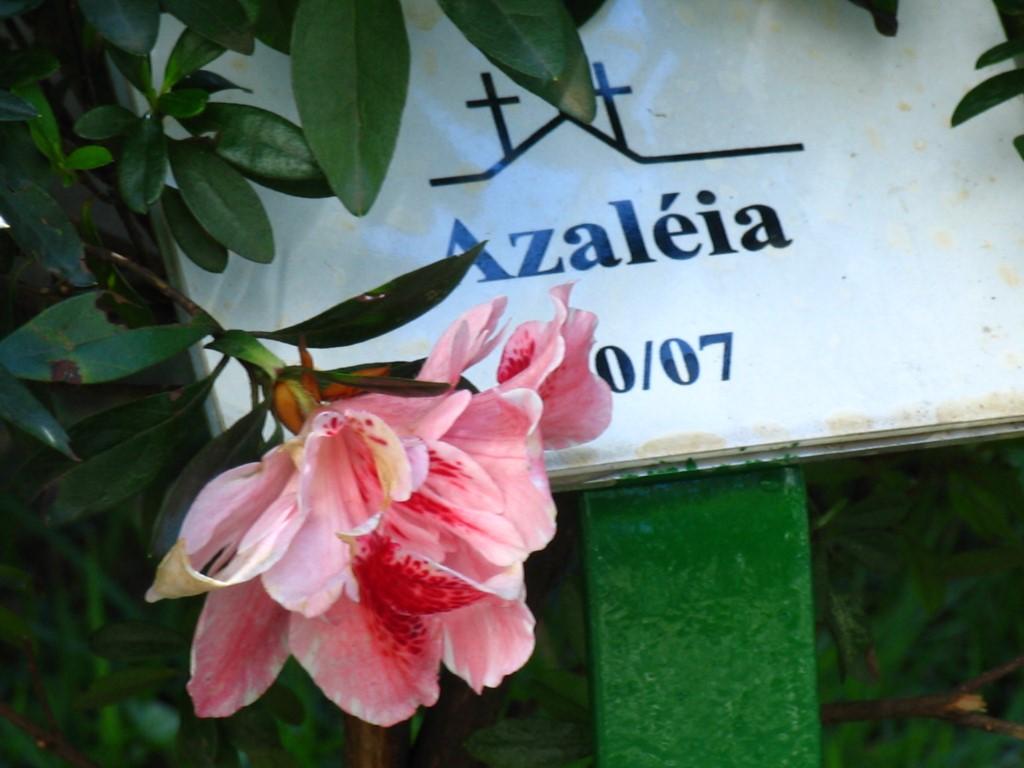 Cemitério-do-Redentor(17)