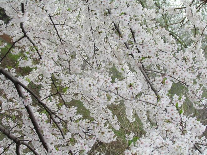 Spring in New York.