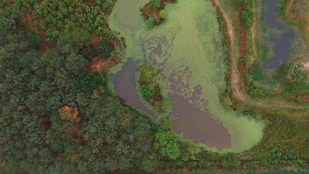 Forest-1-Compressed.jpg