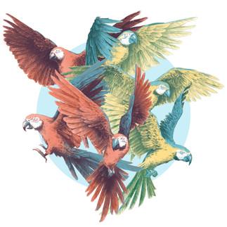 Parrots 1 - couleur.jpg