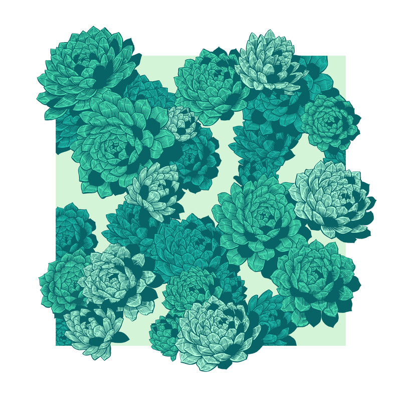 succulent RW.jpg