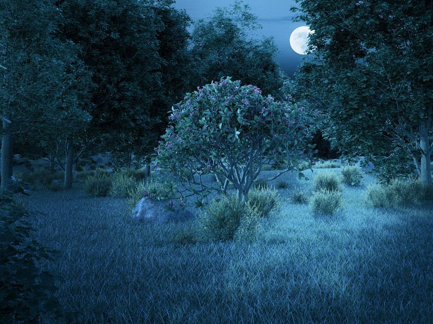 landscape test - summer night sml.jpg