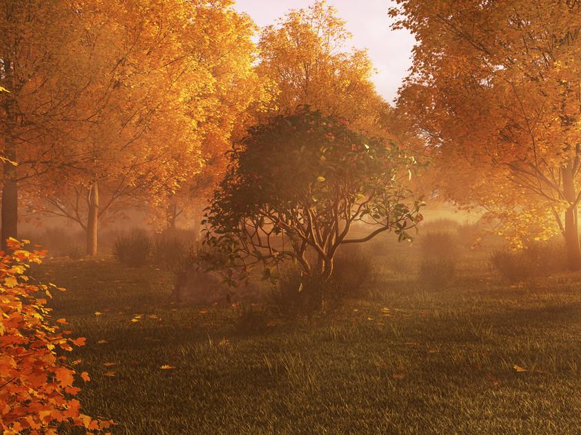 landscape test - automne sunset sml.jpg