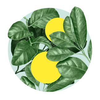 lemon 3.jpg