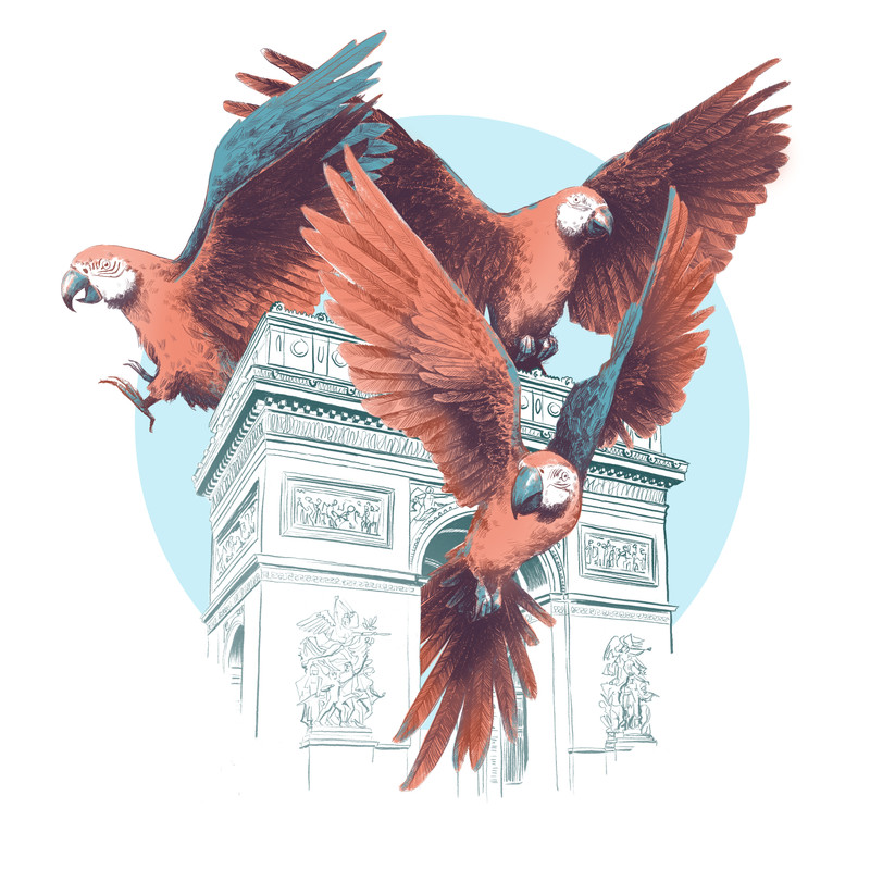 Parrots 1- AdT.jpg
