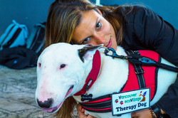 Take the Therapy Dog Quiz