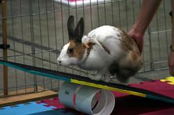 Rabbit on See-Saw