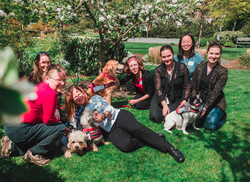 Therapy Dogs in Spring