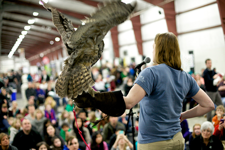 Owl Flapping Show