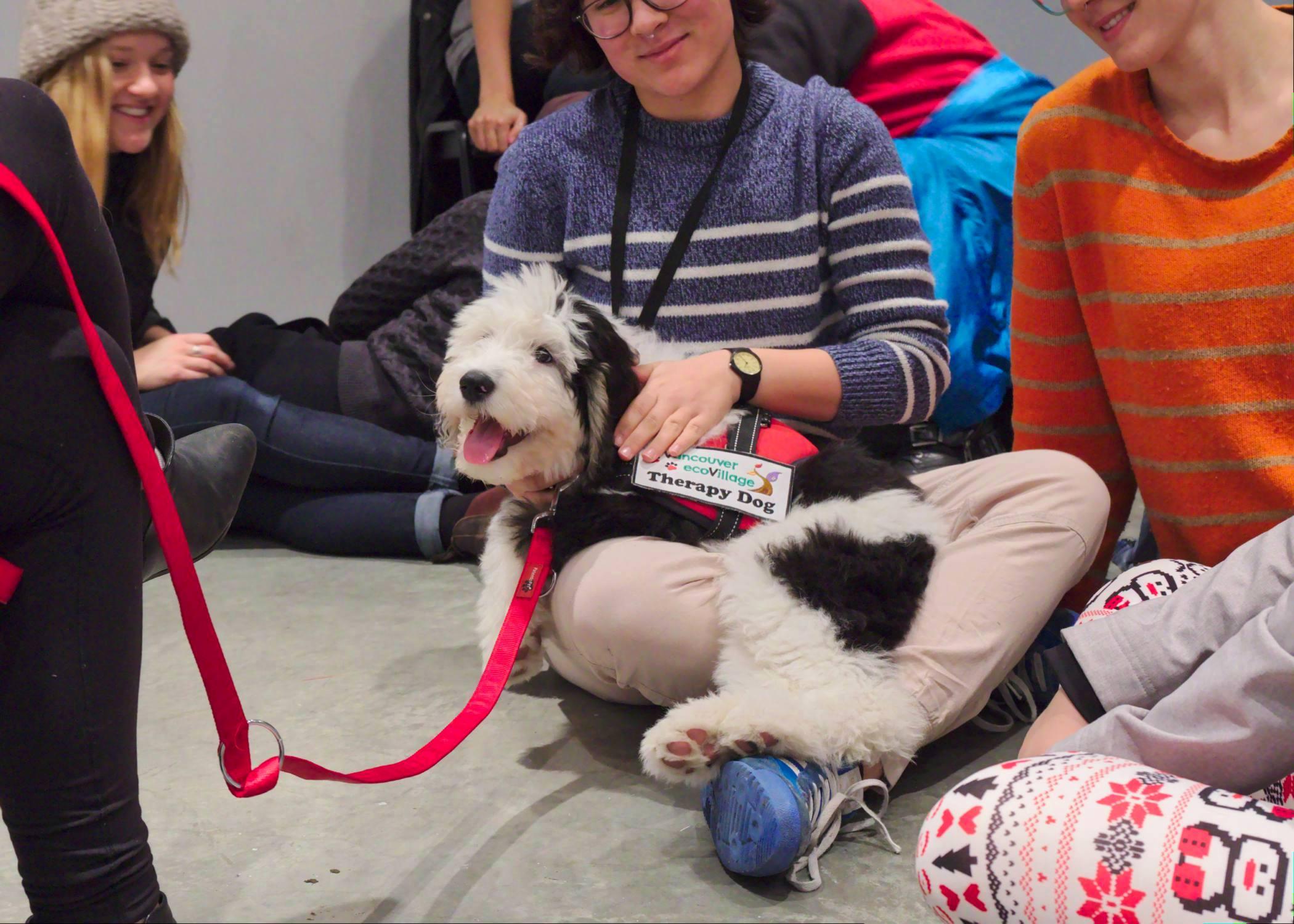 STELLA the Puppy