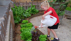 A child watering a vegetabe gardem