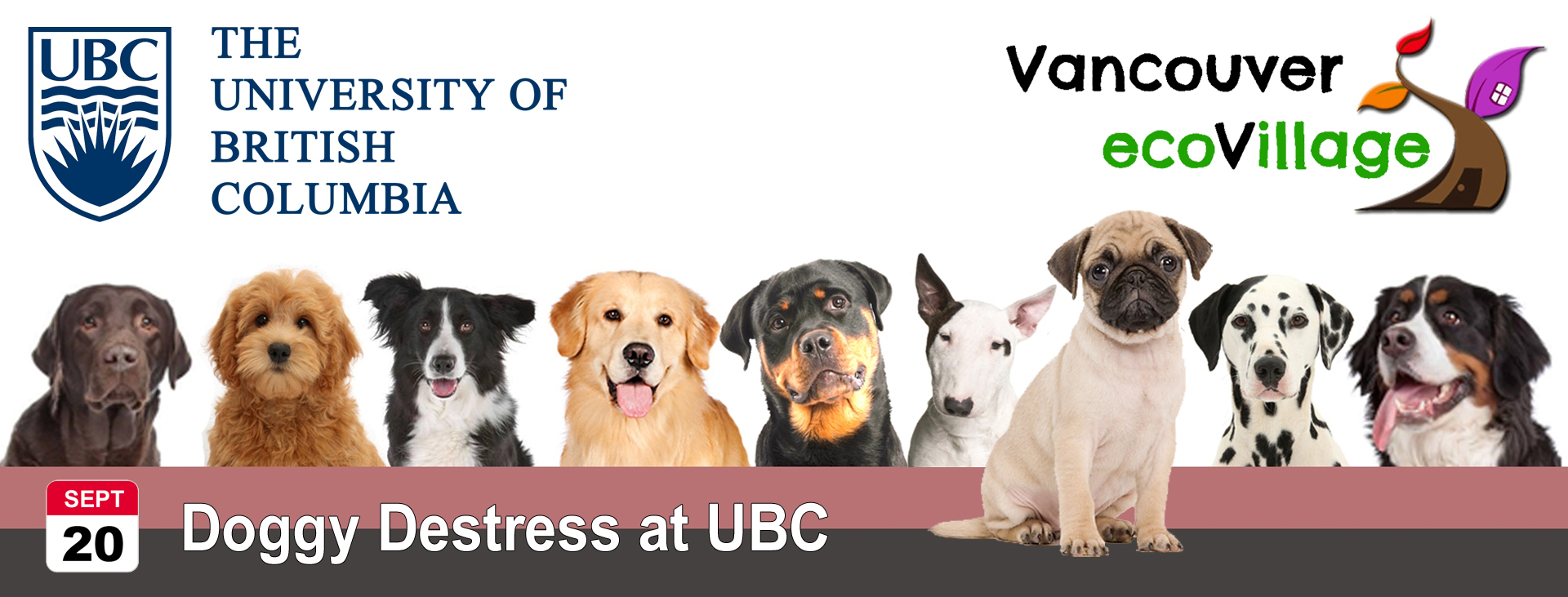 Doggy Destress at UBC