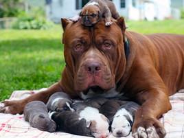 Raising Puppies - Dos and Don'ts