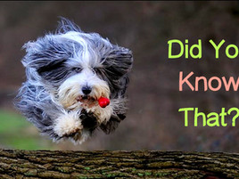 10 Amazing Facts about Dogs