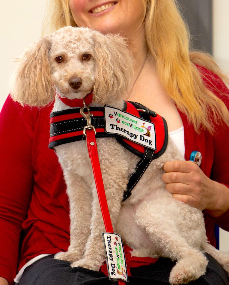 Leia (Miniature Poodle) 💋