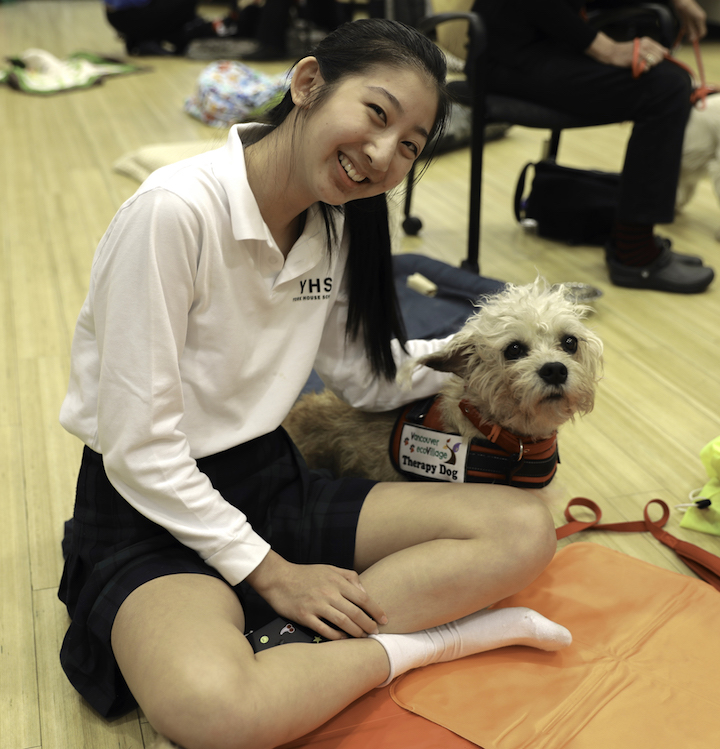 Daisy - Dandimont Terrier