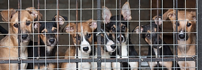 Dog Importation Crisis in Canada