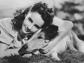 Elizabeth Taylor and Her Life with Dogs
