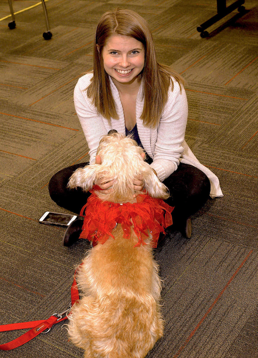 Dandie Dinmont Terrier LUCY 😸