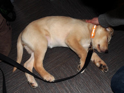 Puppy in Dreamland