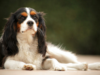 Dogs Recognize Generous vs Selfish People