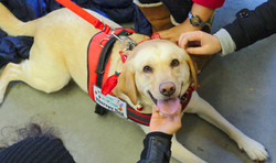 Is Your Dog a Therapy Dog?