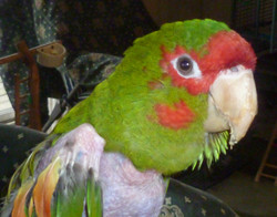 Rescued Parrot