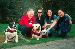 Bully and Dandie Dinmont Terriers