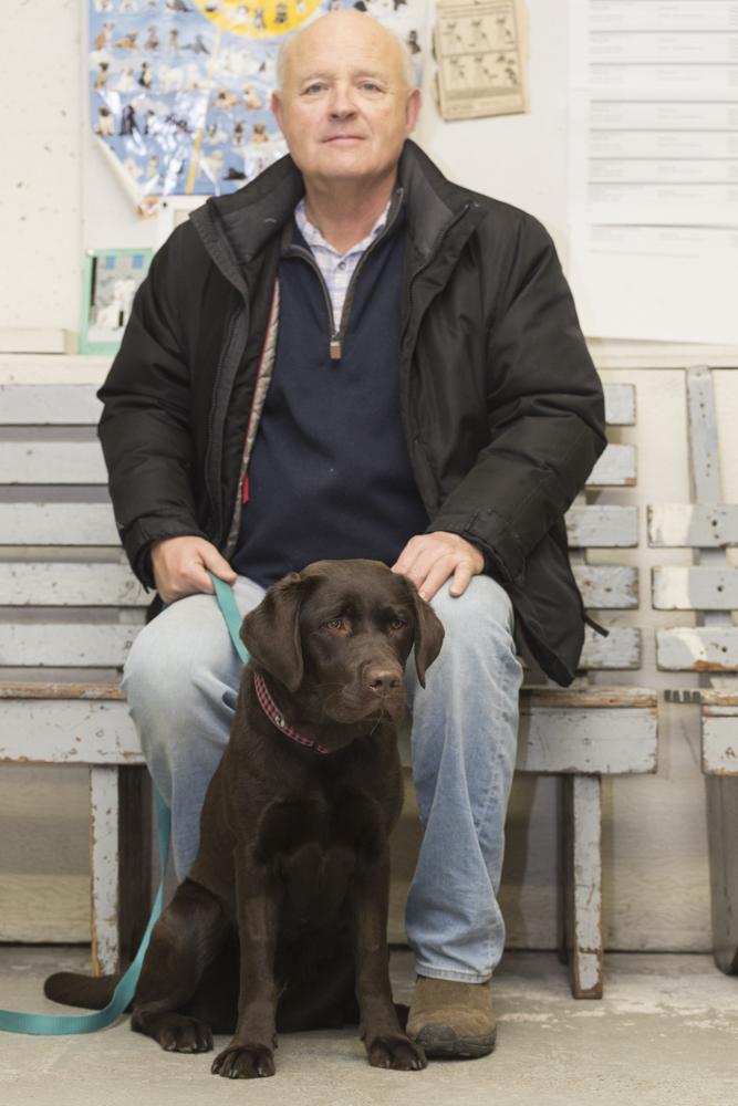Gracie - Labrador Retriever
