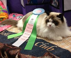 Cat Wins Championship