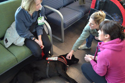 Jo the Perfect Therapy Dog