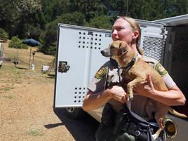 The Secret Life of a Dog Catcher