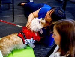 Lucy - Dandie Dinmont Terrier