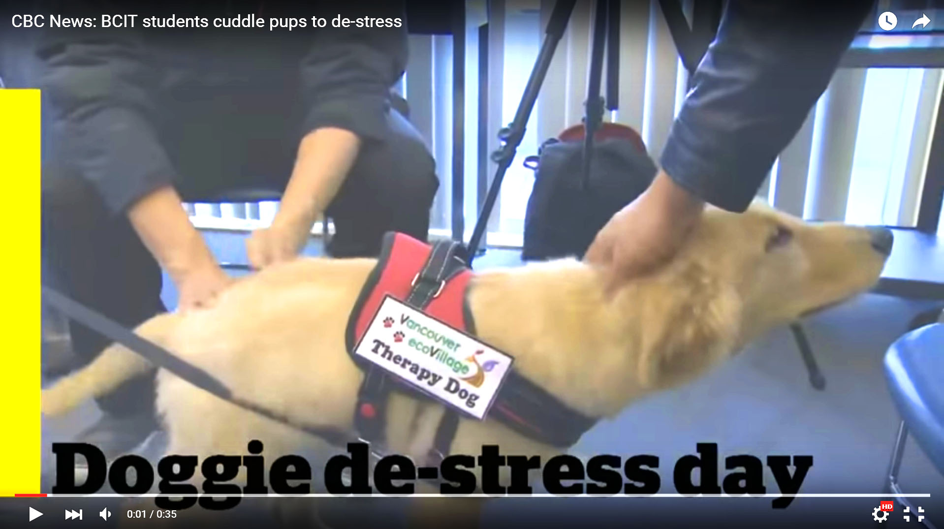 CBC News Video: Therapy Dog Cuddles