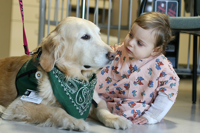 Meet Our Therapy Dogs