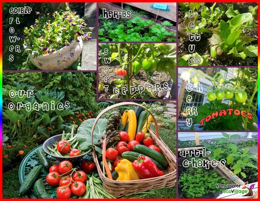 Our Organics