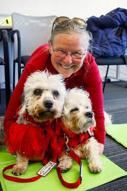 Daisy & Lucy Dandie Dinmont Terriers