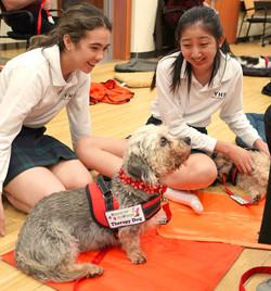 Lucy - Dandimont Terrier
