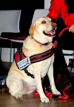 Cassie (Labrador Retriever) 💖