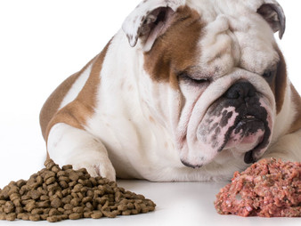 Dog Food: Fact vs Fiction