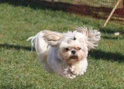Fluffy Dog Race