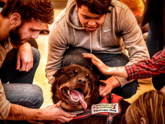 Petting Away Pre-Exam Stress: Therapy Dogs on Campus
