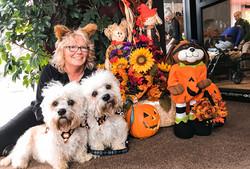 Dandie Dintmont Terriers 💕