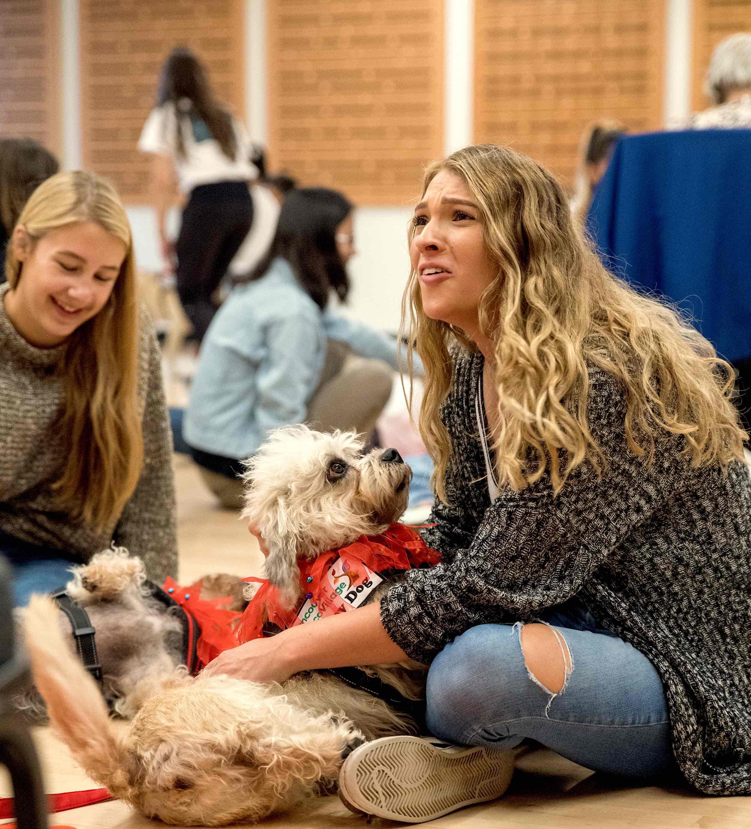 Dandie Dinmont Terrier LUCY