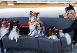 Therapy Dogs Prepping (Tim Stark)